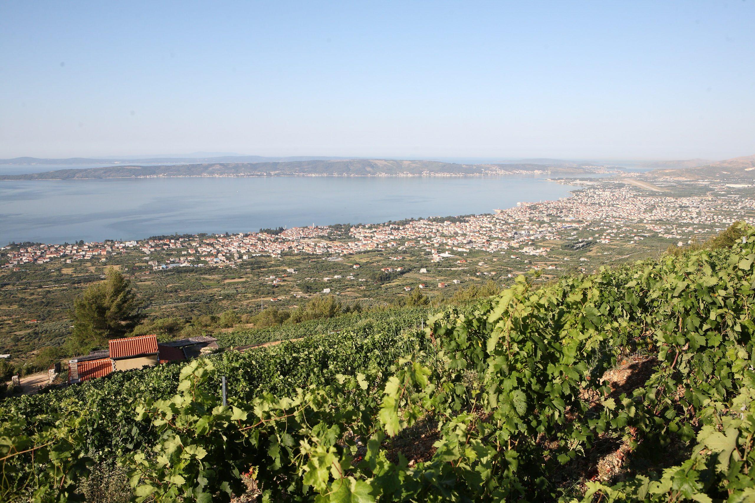 vinograd Bedalov na Kozjaku