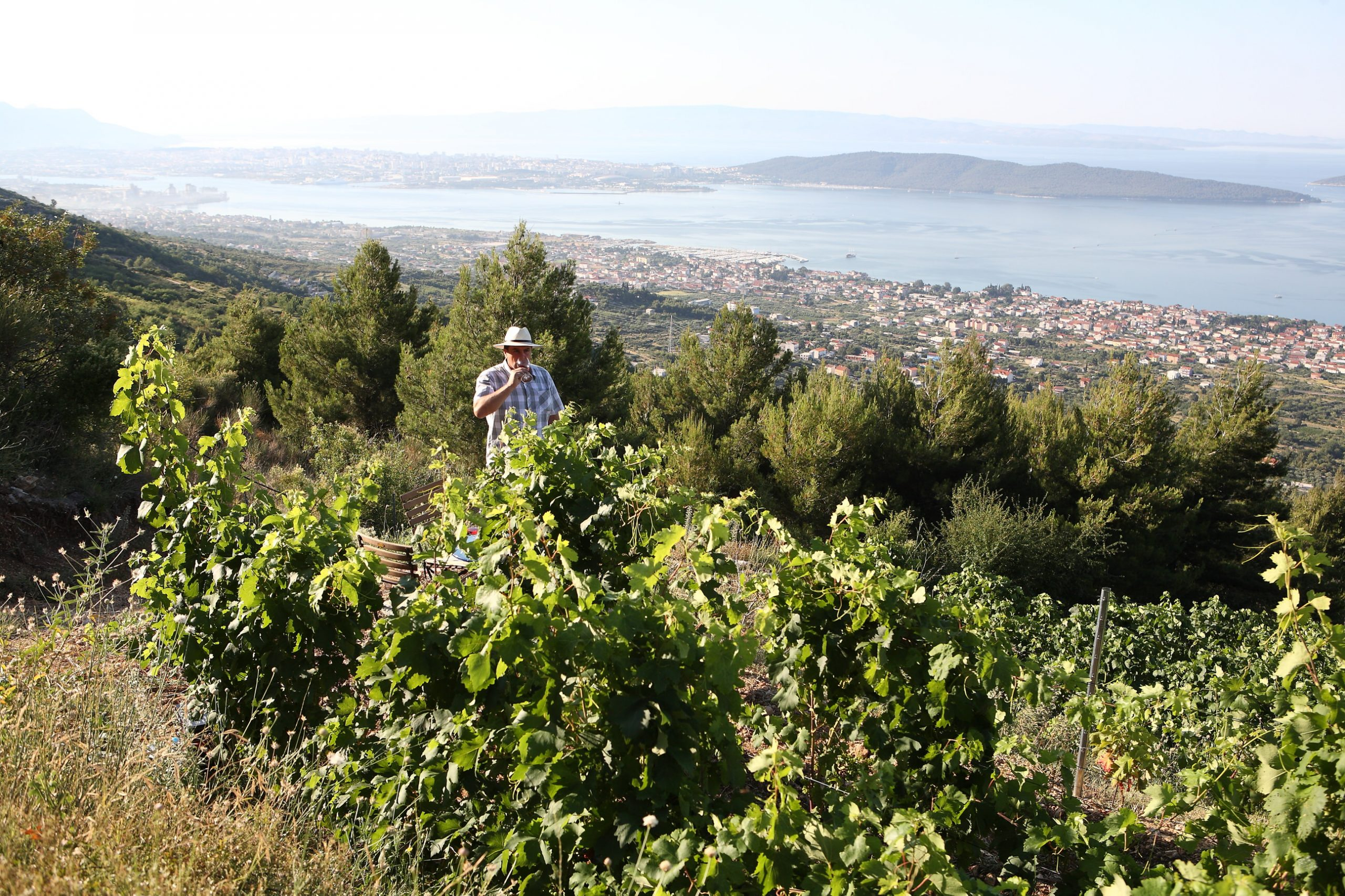 Vinar Jakša Bedalov u vlastitom vinogradu