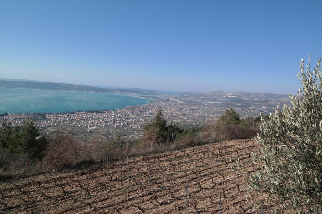 bura wind in bedalov vineyard in Kastela
